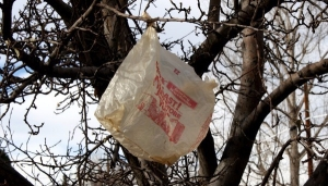 plastic-bag-in-tree-600x400.jpg